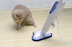 Vacuum cleaner with a surprised cat Royalty Free Stock Photos