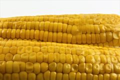 Vacuum sealed fresh corncobs for sous vide cooking cutout on white Stock Photo