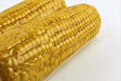 Vacuum sealed fresh corncobs for sous vide cooking cutout on white Stock Image