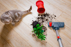 Vacuuming dirt from the floor. Home Royalty Free Stock Photo