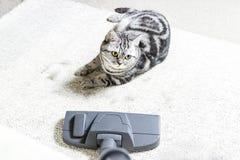 Vacuuming la casa tappeto luminoso e leath leggero immagini stock libere da diritti