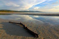 Vada alla deriva il legno su una spiaggia con la riflessione del cielo Immagini Stock Libere da Diritti