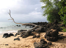 Vada alla deriva il legno sulle rocce e sulla sabbia della lava Immagine Stock