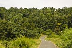 Vada alla foresta Fotografia Stock Libera da Diritti