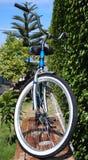 vada in bicicletta la femmina Fotografia Stock