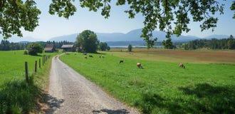 Vada in bicicletta lo staffelsee rotondo dell'itinerario, Baviera rurale del paesaggio Fotografie Stock