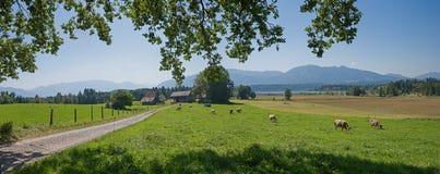 Vada in bicicletta lo staffelsee rotondo dell'itinerario, Baviera rurale del paesaggio Fotografia Stock Libera da Diritti
