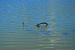 Vada in bicicletta nel lago Fotografia Stock