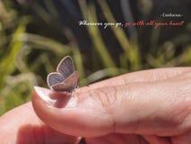 Vada con il vostro cuore Fotografie Stock