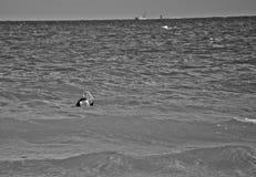 Vada in i havet Royaltyfri Bild