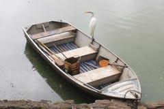 vada vit zoo för fågelpaulo sao Arkivfoto