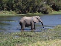 Vadear el elefante Imágenes de archivo libres de regalías