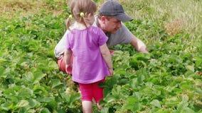 Vader en dochter die tuinaardbei, familielandbouwbedrijf verzamelen stock videobeelden
