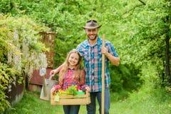 Vader en dochter op boerderij Familielandbouwbedrijf ecologie Het tuinieren nieuwe hulpmiddelen, rietdienblad Meisje en gelukkige stock foto