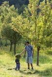 Vader en kind in appelboomgaard Royalty-vrije Stock Afbeeldingen