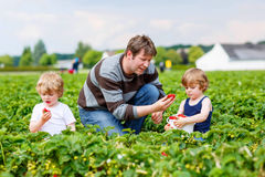 Vader en twee kleine jong geitjejongens op aardbeilandbouwbedrijf in de zomer Stock Afbeeldingen