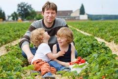 Vader en twee kleine jongens op organisch aardbeilandbouwbedrijf Royalty-vrije Stock Foto