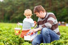 Vader en weinig jong geitjejongen op aardbeilandbouwbedrijf in de zomer Stock Afbeelding