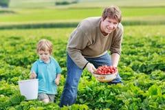 Vader en weinig jongen van 3 jaar op organisch aardbeilandbouwbedrijf in s Stock Afbeeldingen
