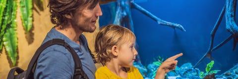 Vader en zoon die vissen in een BANNER van het tunnelaquarium bekijken, LANG FORMAAT stock afbeeldingen