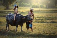 Vader en zoon met een buffel deze levensstijl Thaise mensen in Coun stock afbeeldingen