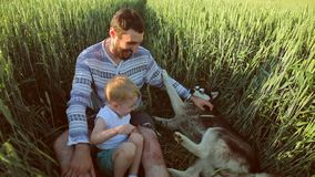 Vader en zoons het spelen met een hond op het tarwegebied Het concept van de vaderdagfamilie stock video