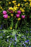 VAERIOUS COLOUR TULIPS FLOWERS Royalty Free Stock Photos