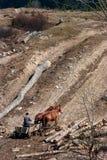 Vagão com cavalos Fotografia de Stock Royalty Free