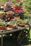 vagão de madeira velho com muitos potenciômetros das flores Fotografia de Stock Royalty Free
