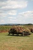 Vagões do milho Fotografia de Stock Royalty Free