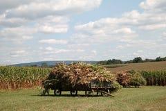 Vagões do milho Foto de Stock Royalty Free