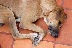 Vagabond Dog Stock Photo