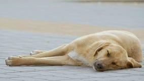 Vagabond light dog sleeping on the sidewalk slow motion video. The street a stray light dog sleeps on the sidewalk slow motion video stock footage