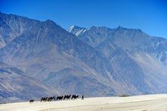 Vagabundo dos camelos na duna de areia, india Fotos de Stock Royalty Free