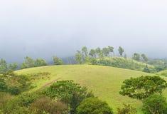 Vagamonheuvels en Weiden - Misty Hills en Regenachtig Klimaat, Idukki, Kerala, India stock foto's
