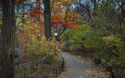 Vagando attraverso il Central Park in autunno immagini stock libere da diritti