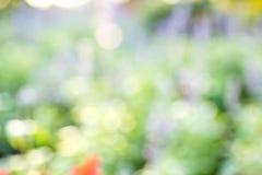 Vage aardbloemen als achtergrond in tuin Stock Fotografie