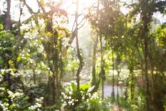 Vage abstracte achtergrond van tropische groene bladeren in het bos stock afbeelding