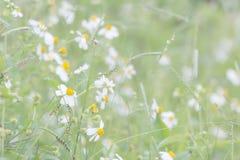 Vage abstracte Bloemen als achtergrond in de weide Stock Foto