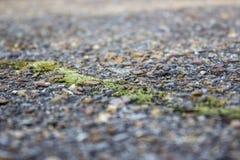 Vage achtergrond, een barst in het oude die asfalt, met groen mos wordt overwoekerd royalty-vrije stock fotografie