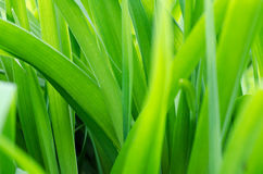 Vage achtergrond met groen gras Stock Fotografie