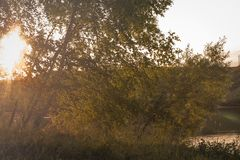 Vage achtergrond, zonstralen door de bomen stock foto's