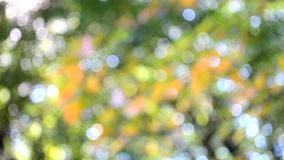 Vage bladeren als achtergrond op boom groen roze stock footage
