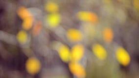 Vage bladeren als achtergrond op de boomherfst stock footage