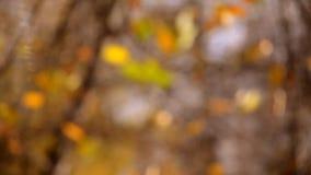 Vage bladeren als achtergrond op de boomherfst stock video