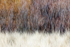 Vage bruine de winter bosachtergrond Stock Afbeeldingen