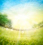 Vage de aardachtergrond van de de lentezomer met groene weide, bomen op horizon en zonstralen