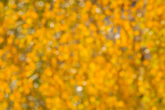 Vage de herfstachtergrond van vergeelde de herfstbladeren in zonnig weer royalty-vrije stock afbeelding