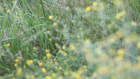Vage grasachtergrond met waterdalingen stock video