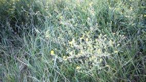Vage grasachtergrond met waterdalingen HD schot met Gemotoriseerde Schuif stock videobeelden